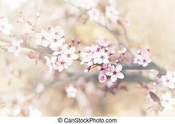 flor de primavera, árbol, cereza