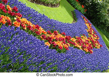flor de primavera, keukenhof, cama