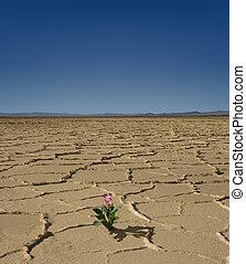 flor, deserto