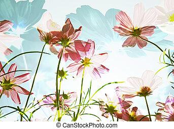 flor, doble, soleado, day., campo, exposición