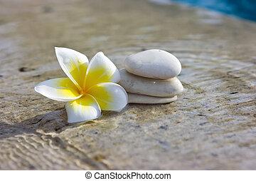 flor, e, pedras, em, hotel, spa