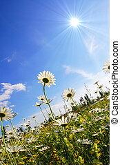 flor, em, verão, sob, céu azul