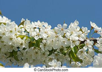 flor, en, árbol