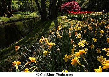 flor, en, keukenhof, jardín