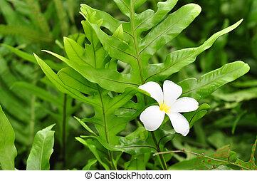 flor, en, planta verde
