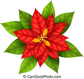 flor, estrela, natal, poinsettia, isolado
