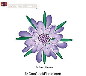 flor, flor, scabiosa, comosa, nacional, mongolia