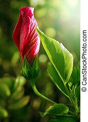 flor floreciente