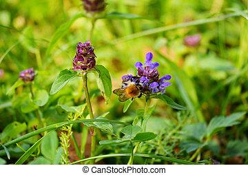 flor, folhas, polinizando, abelha, alto, pétalas, verde, violeta, listrado, caule