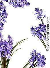 flor, frontera, bluebell