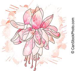 flor, fucsia, dibujo