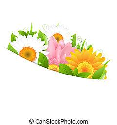 flor, gerber, y, hojas