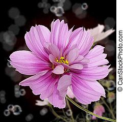 flor, hermoso, frontera