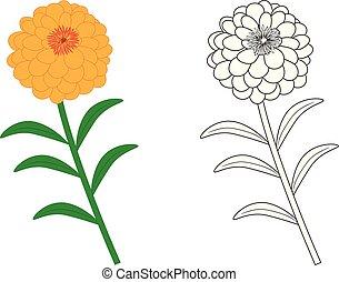 flor, illustration., colorido, vector, negro, colors.,...