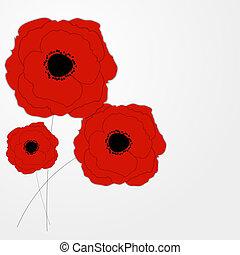 flor, ilustração, vetorial, fundo, papoulas, vermelho