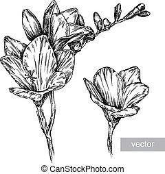 flor, ilustración, grabar