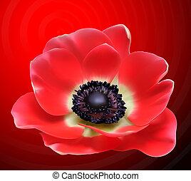 flor, ilustración, vector, amapola, rojo, design.