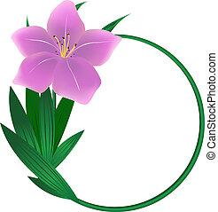 flor, lírio, redondo, fundo