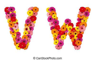 flor, letra, alfabeto, -, isolado, w, v, branca
