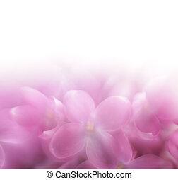flor, lila, lensbaby, foco, space., len, plano de fondo, ...