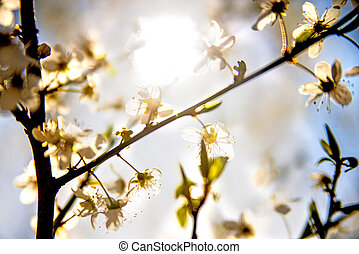 flor, luz, espalda, mirabelle
