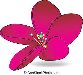 flor, magenta