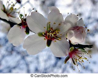 flor, manzana