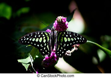 flor, mariposa, sobre, una, parada