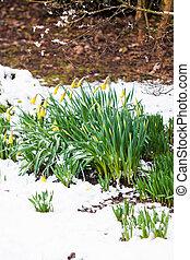 flor mola, neve
