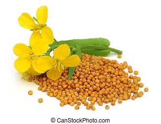 flor, mostarda, Sementes
