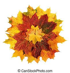 flor, organizado, coloridos, folhas, outono, forma