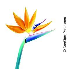flor, pássaro, paraisos