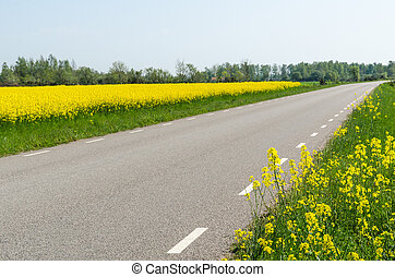 flor, país, cercado, semente, violação, estrada