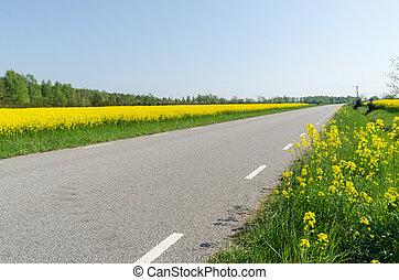 flor, país, semente, violação, campos, lado, estrada