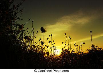 flor pasto
