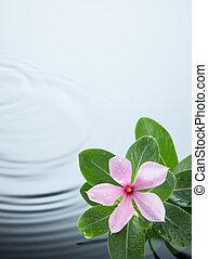 flor, planta, y, ondulación del agua