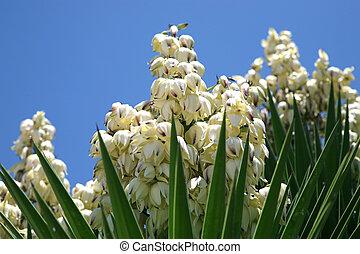 flor, planta, yuca