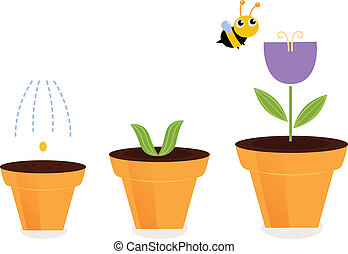 flor, ), (, potes, isolado, tulipa, crescimento, branca, fases