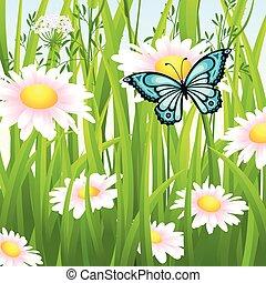 flor, pradera, en, verano, con, mariposa