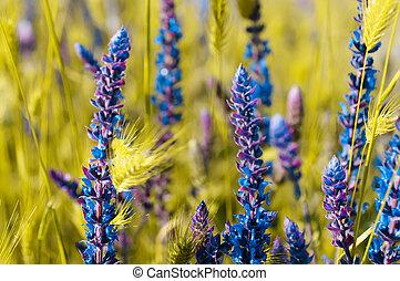 flor, pradera, violeta