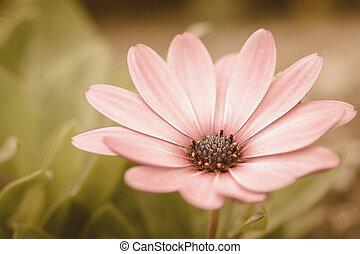 flor, prado, vindima, retro
