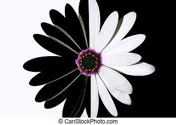 flor, preto branco