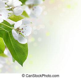 flor, primavera, borda