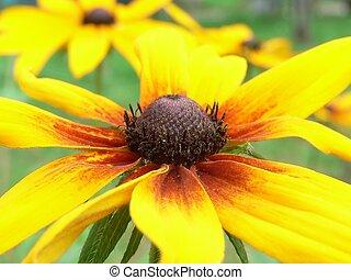 flor, primer plano, amarillo