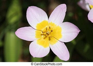flor, primer plano