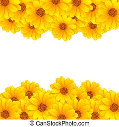 flor, rayas