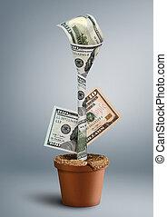 flor, riqueza, conceito, dinheiro, pote, criativo, crescendo