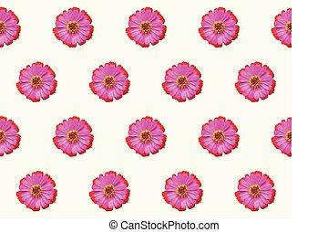 flor rosa, naturaleza, violacea, patrón, resumen, seamless,...