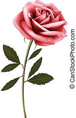 flor rosa, rose., plano de fondo, vector.