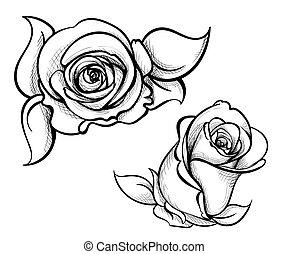 flor, rosas, ilustración, mano, dibujado, flor, conjunto, rosa, colección